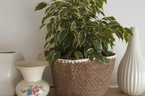 in einem selbstgemachten Jutekorb ist eine Birkenfeige, daneben stehen weiße Vasen auf dem Regal
